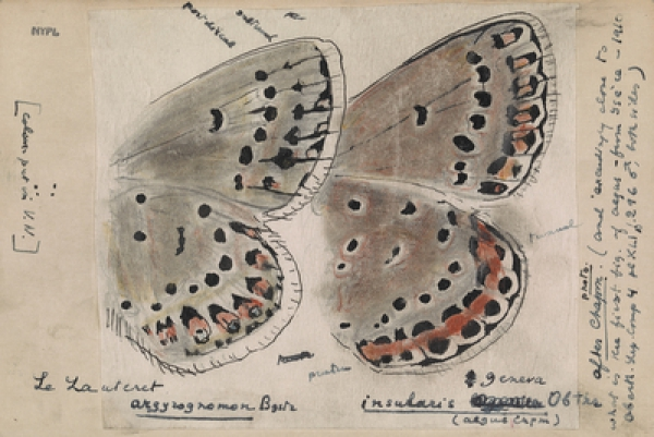 Entomology: Nabokov's scientific artistry