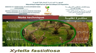 "Technical note 04 13 AOÛT 2019 ""XYLELLA FASTIDIOSA"""